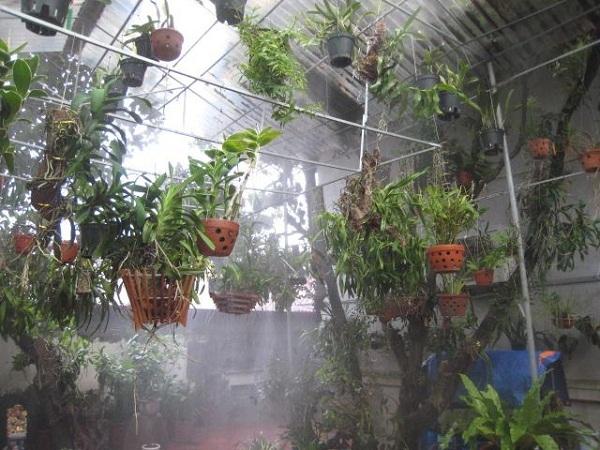 Lắp đặt hệ thống phun sương tưới lan tại Hồ Chí Minh