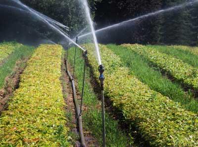 Hướng dẫn lắp đặt hệ thống phun nước tự động