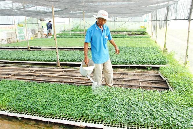 Ngưỡng mộ mô hình sản xuất giống rau màu các loại, thu 3 tỷ đồng/năm