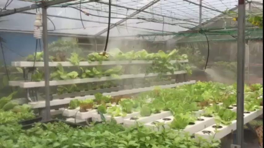 Lắp đặt máy phun sương tưới vườn rau tại quận 6