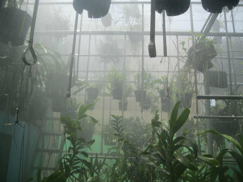 Sử dụng hệ thống máy phun sương tưới lan  hiệu quả nhất?