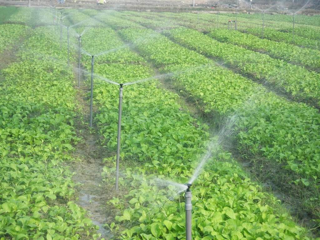 Thi công- Lắp đặt hệ thống phun sương cho công ty rau sạch huyện Củ Chi